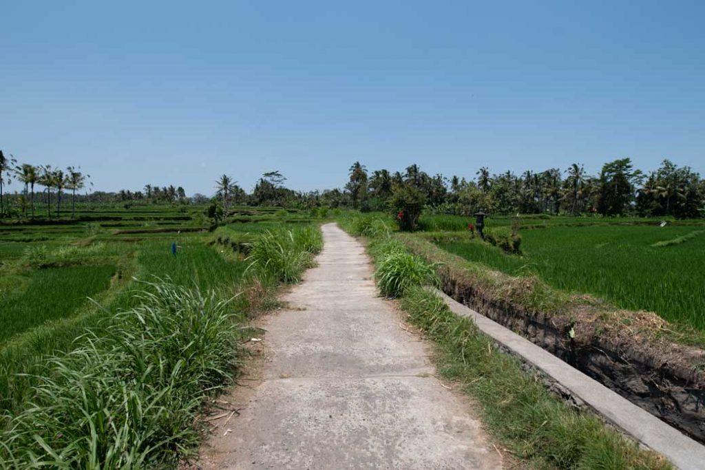 Einer der Wege, die wir mit unseren Rädern entlang der Reisfelder fuhren.