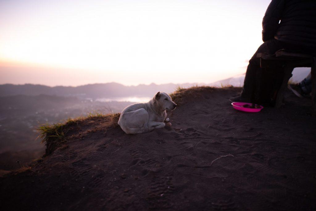 Auch auf Bali gibt es viele Straßenhunde. In diesem Fall sogar am Vulkan.