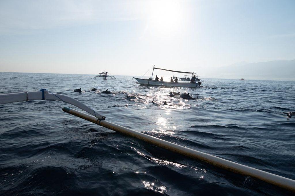 So nah war ich Delfinen noch nie. Auch wenn wir uns diesen Moment mit gefühlt 100 anderen Booten um uns herum teilen mussten, war es wunderschön.