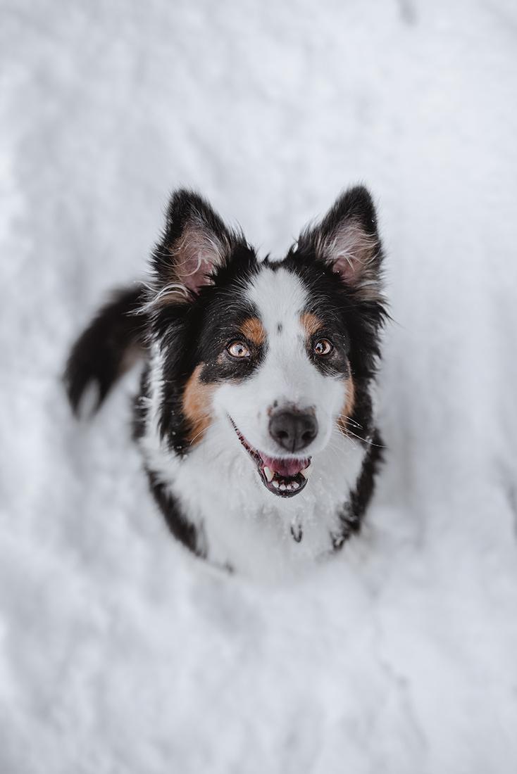 Hund Fotoshooting