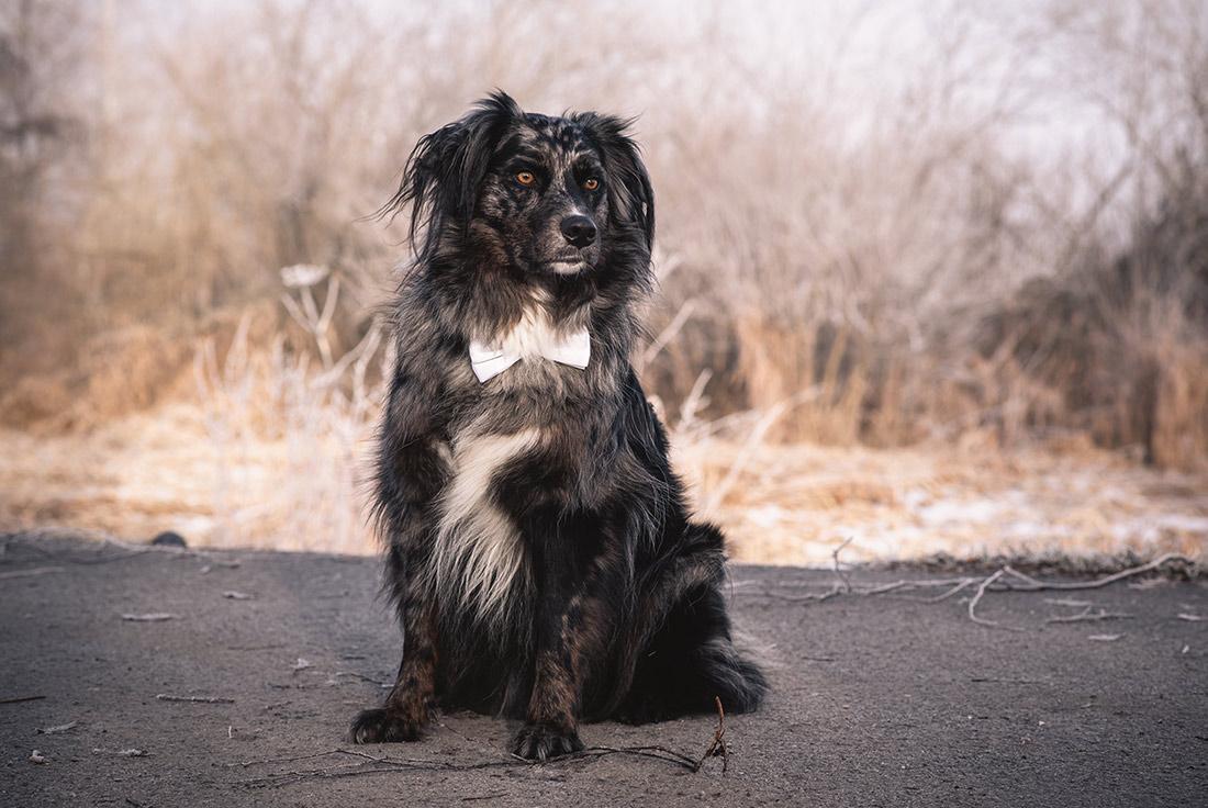 Hund mit Schleife