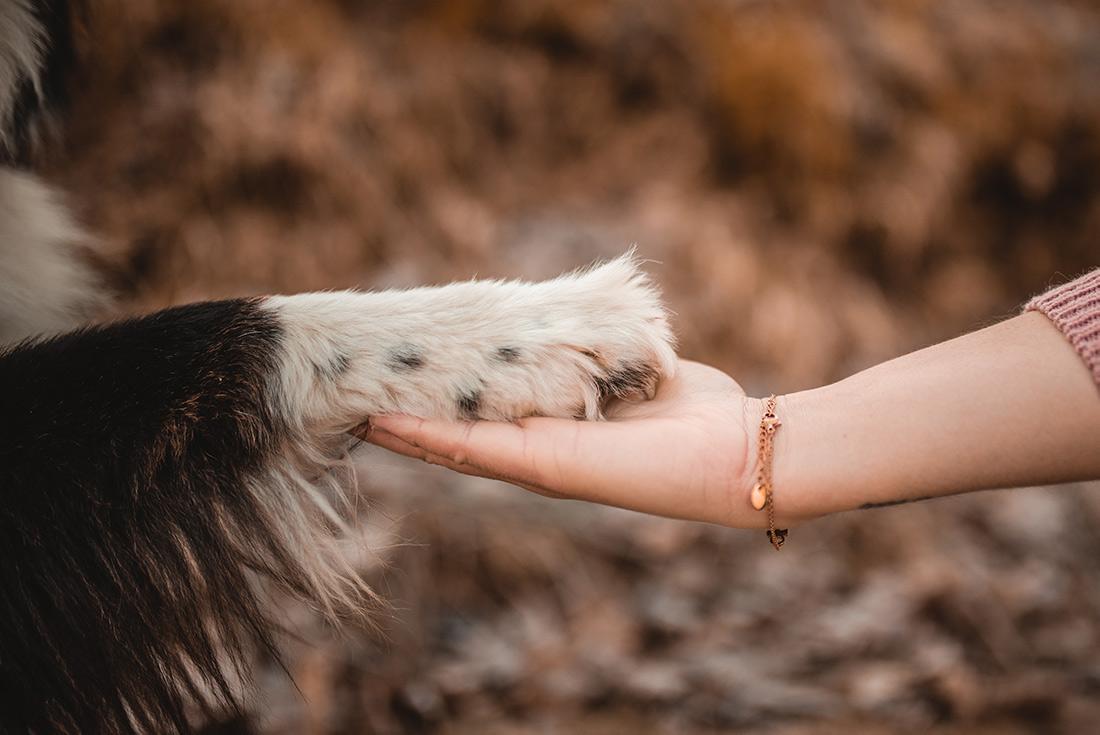 Hundepfote Mensch