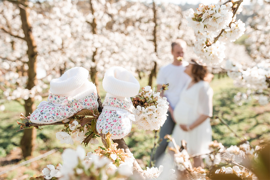Babybauch-Fotoshooting Kirschblüten Babyschuhe