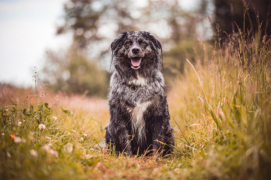 Hundefoto Outdoor professionell