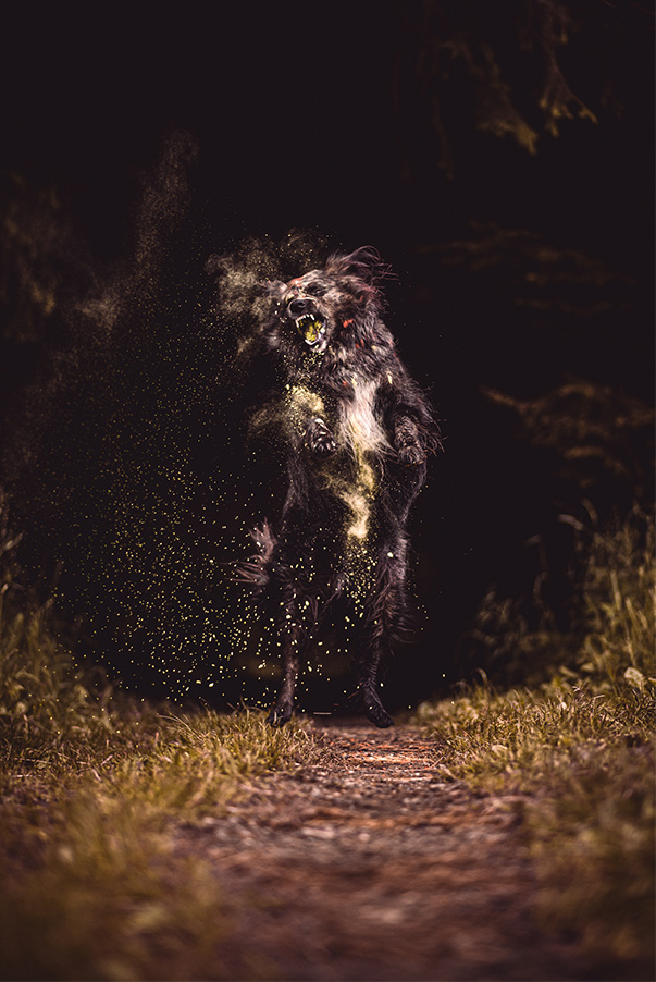 Action Hunde-Fotoshooting Holi Farbpulver